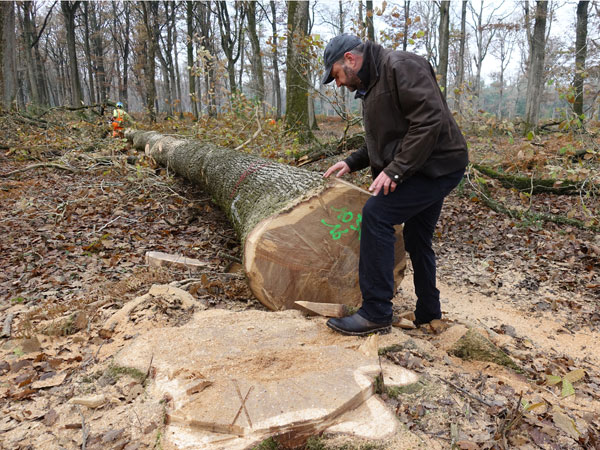 alban petiteaux inspecting tree in forest