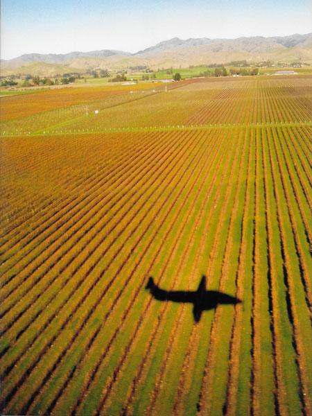 airplane over marlborough vineyard